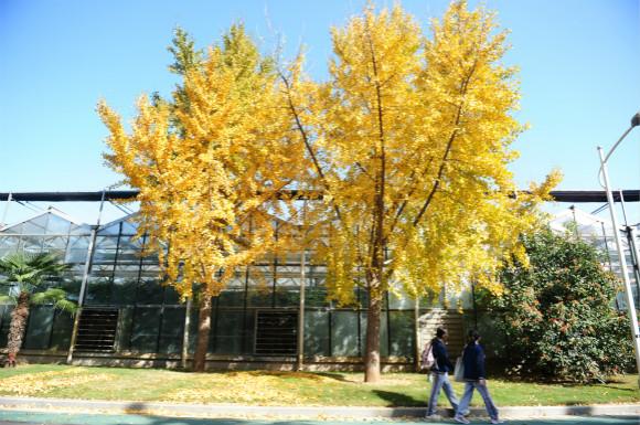 郑州绿博园用落叶刻画出别样美景